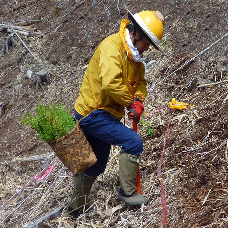 植林・下刈り・除伐・間伐・伐採