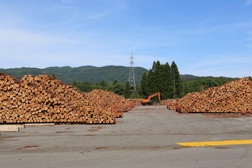 仕分けされた大量の原木の画像