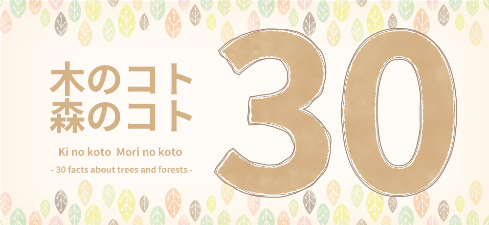 木のコト森のコト30